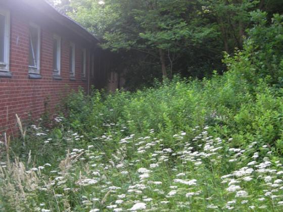 Urlaub 2014, wo einst unsere kleinen Gärtchen waren (hinter der Schule)