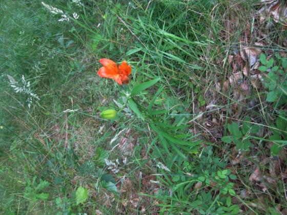 Urlaub 2014 - zarte Pflanzen drücken sich durchs Unkraut